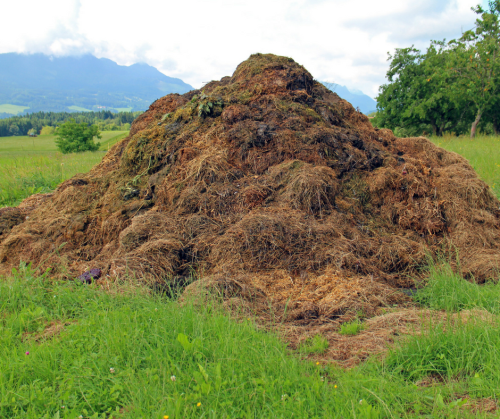 huge pile of manure
